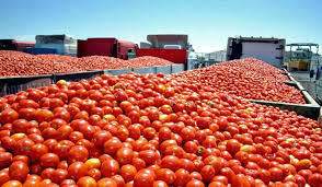 La Oficina de Aduanas y Protección Fronteriza de Estados Unidos emitió una orden de detención de descargo respecto a tomates frescos producidos por empresa mexicana.
